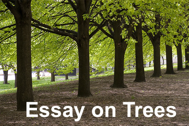 essay on trees in english